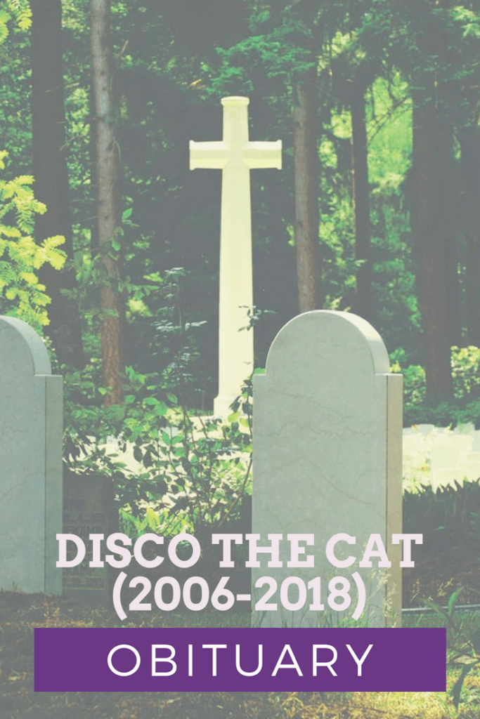 Obituary: Disco The Cat (2006-2018)