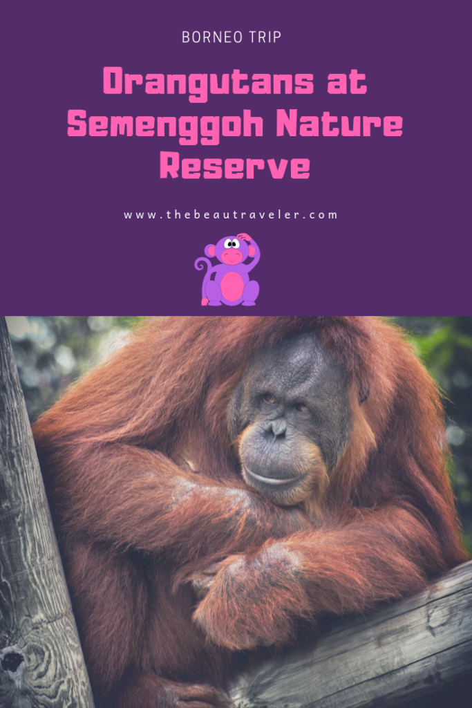 Watching Orangutans at Semenggoh Nature Reserve - The BeauTraveler