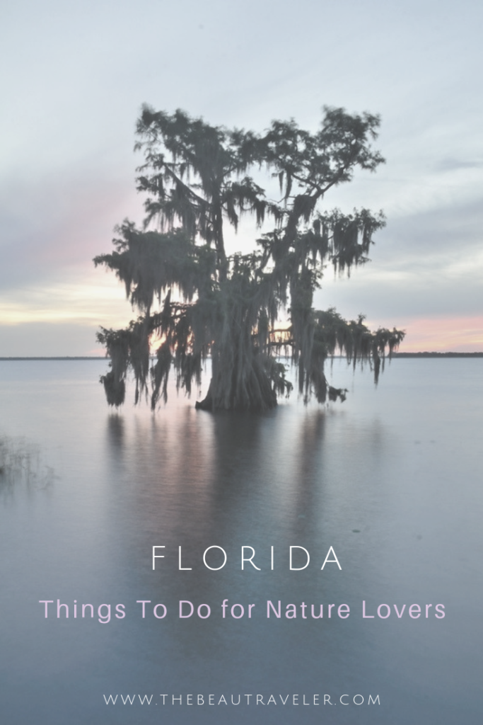 Things To Do in Florida for Nature Lovers - The BeauTraveler