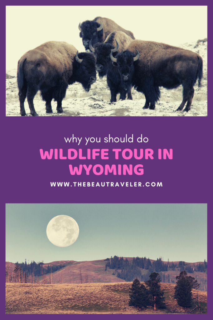 Why Take Wildlife Tours in Wyoming During Your Vacation - The BeauTraveler