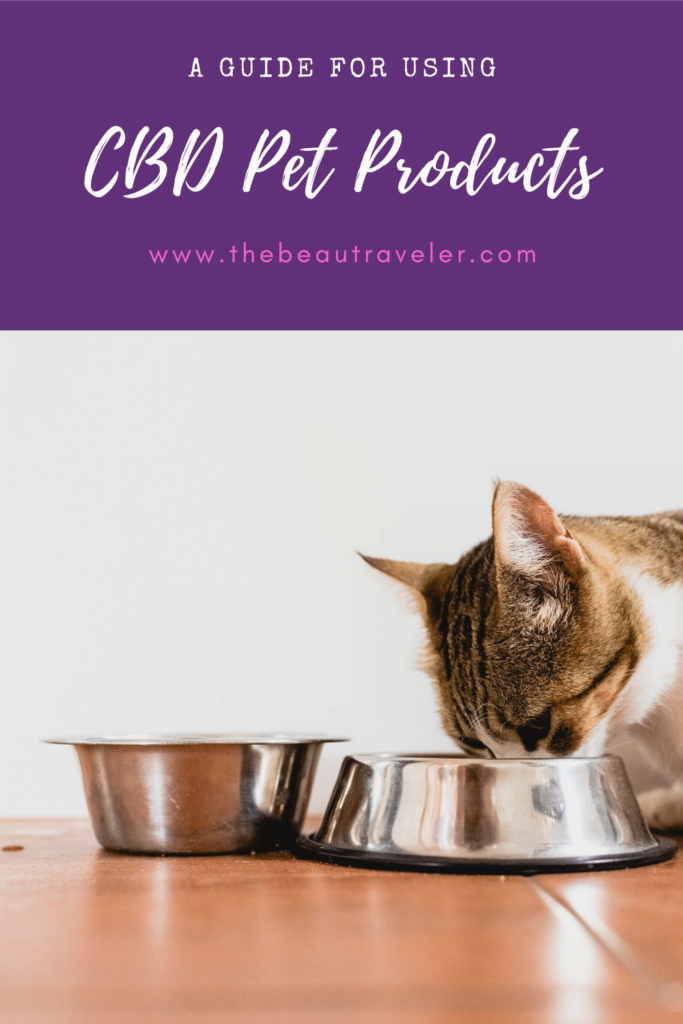 A Guide for Using CBD Pet Products - The BeauTraveler